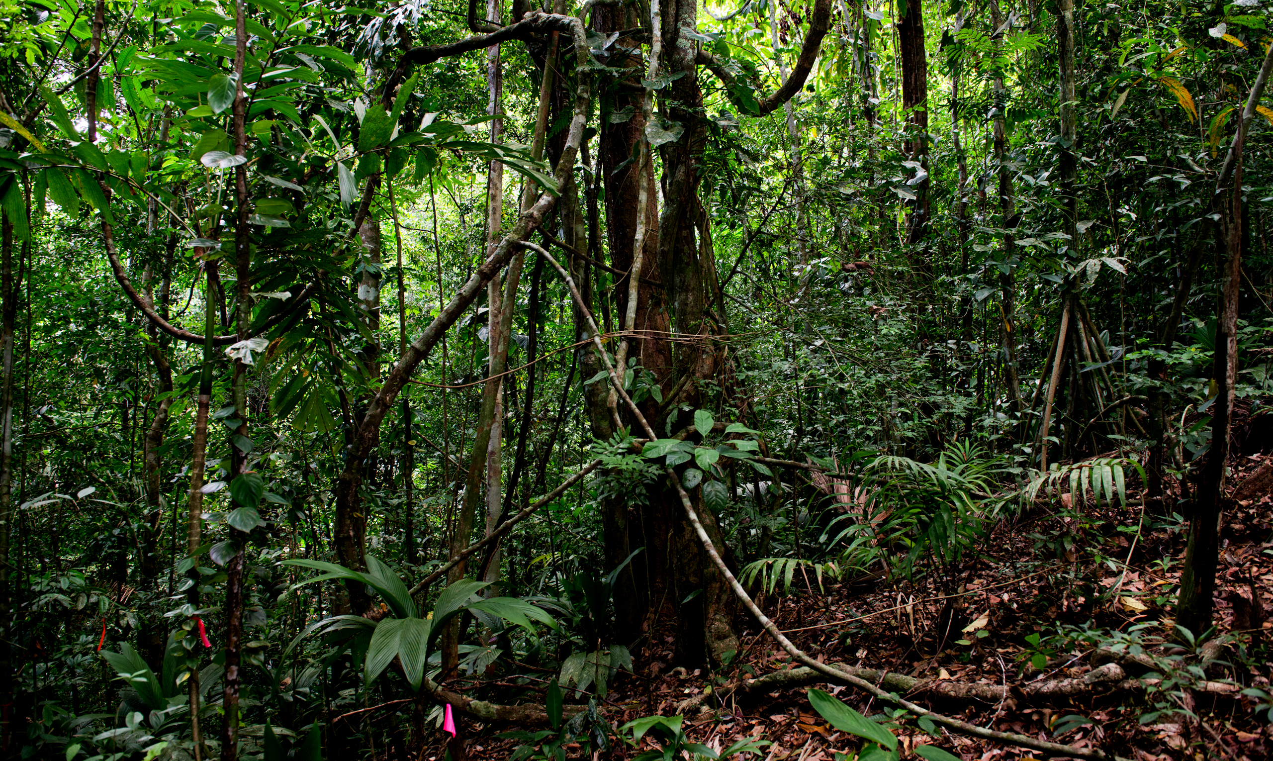 Tropical forests store almost 30 percent of terrestrial carbon worldwide, a critical buffer against climate change