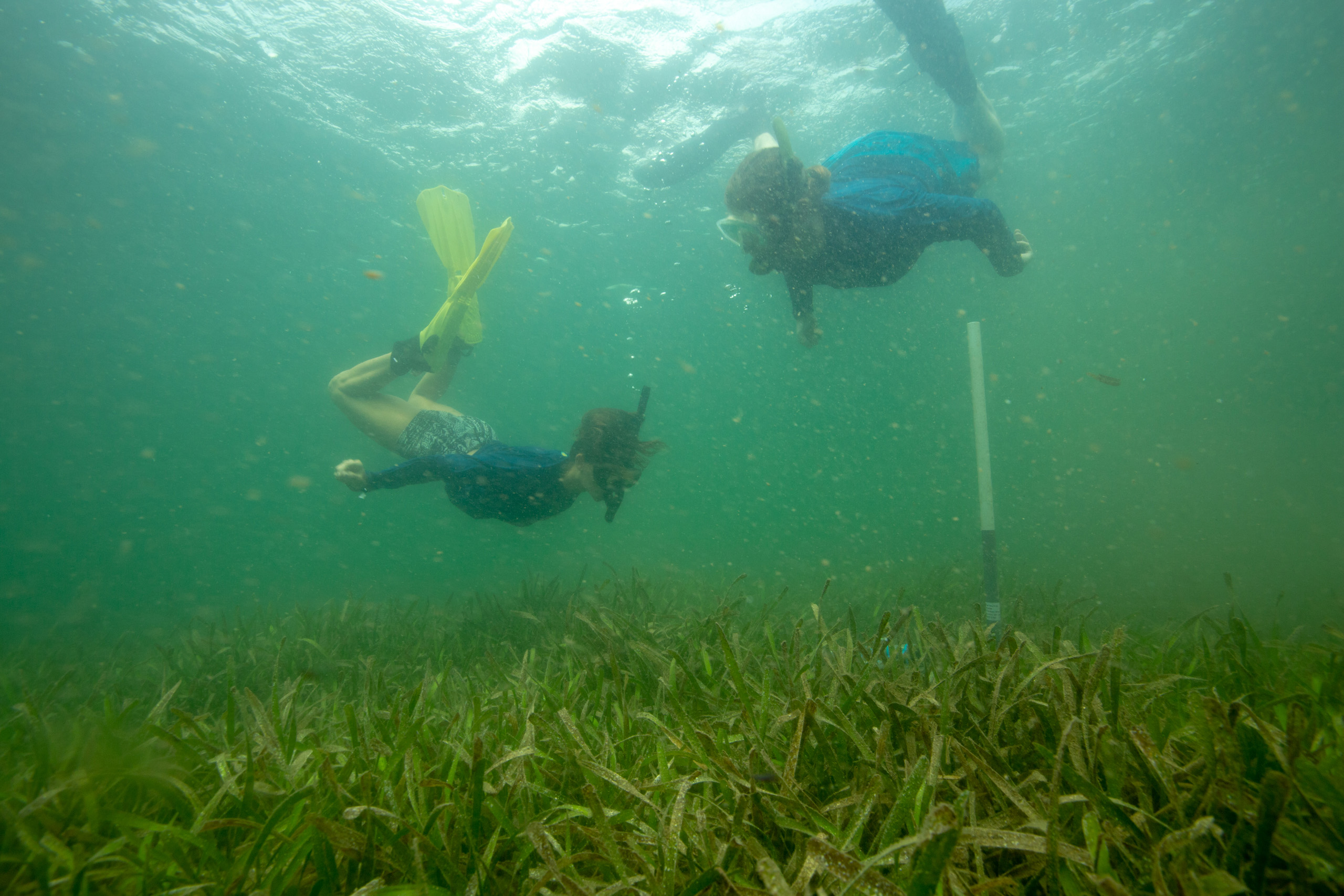 Constant change drives local ecosystems