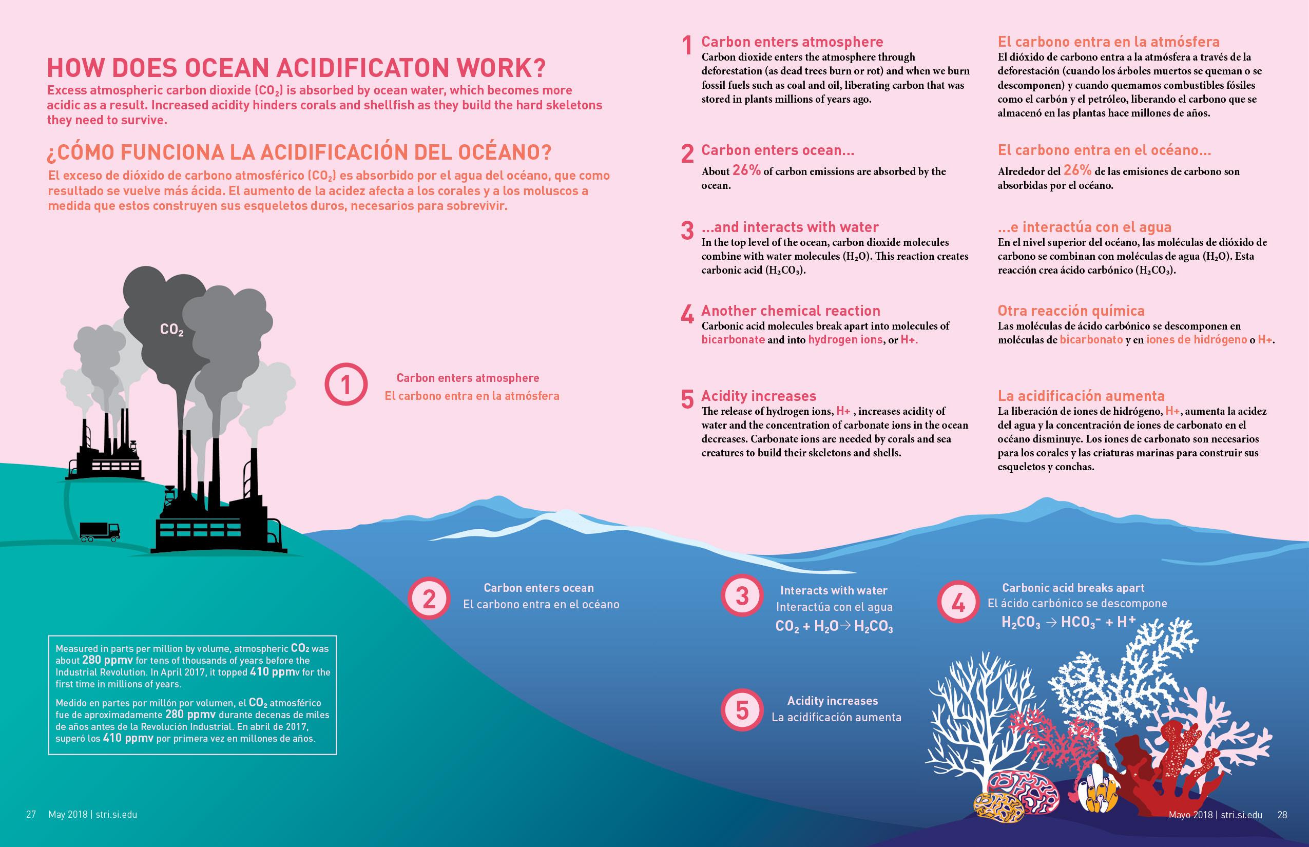 A graphic on ocean acidification.