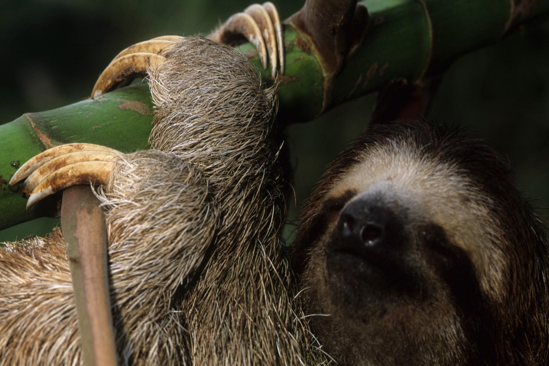 Sloth Moths, Algae and Fungi