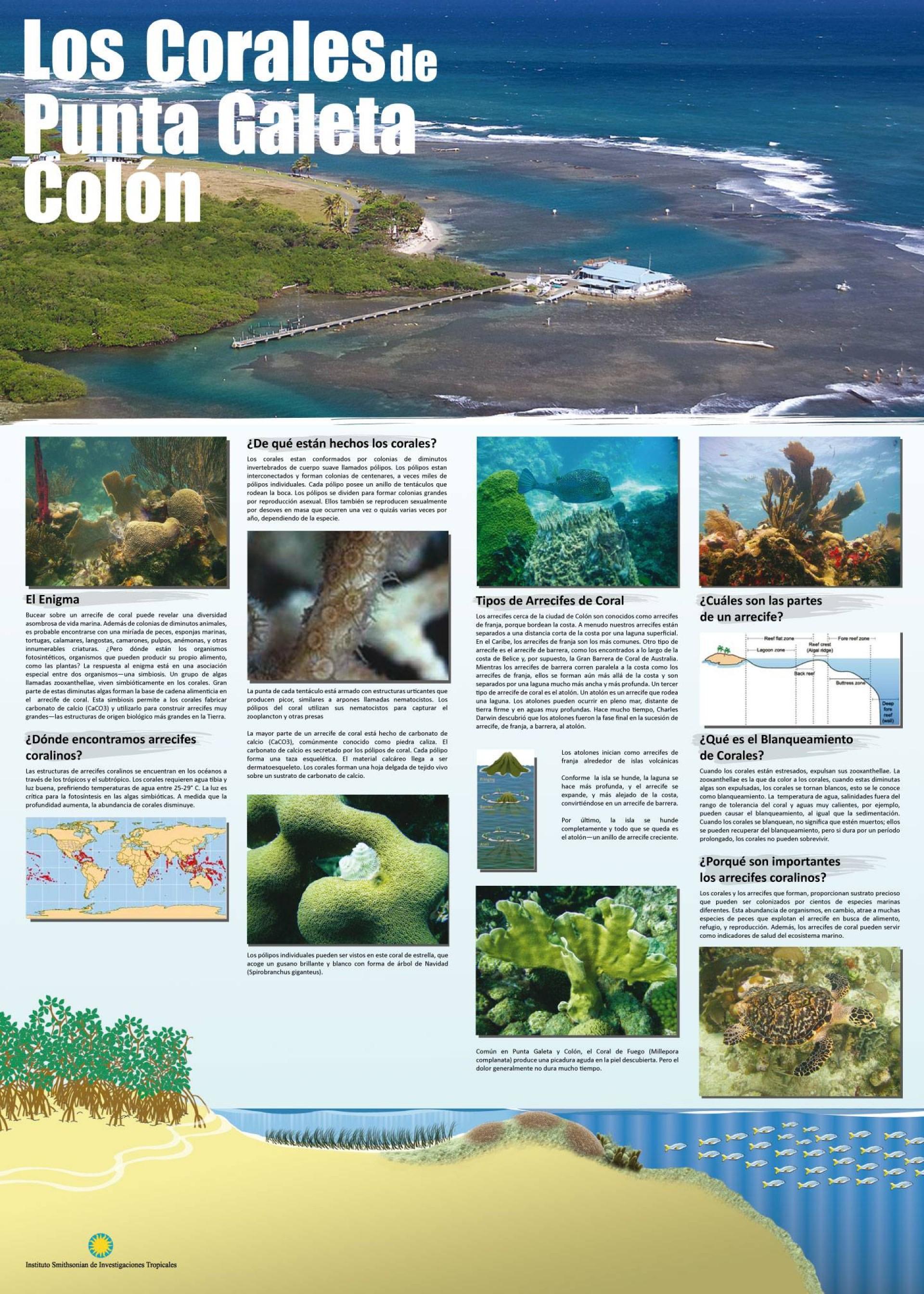Corales de Punta Galeta