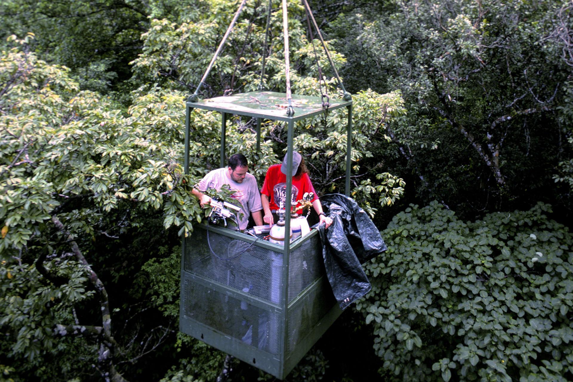 Canopy Cranes Gallery 3