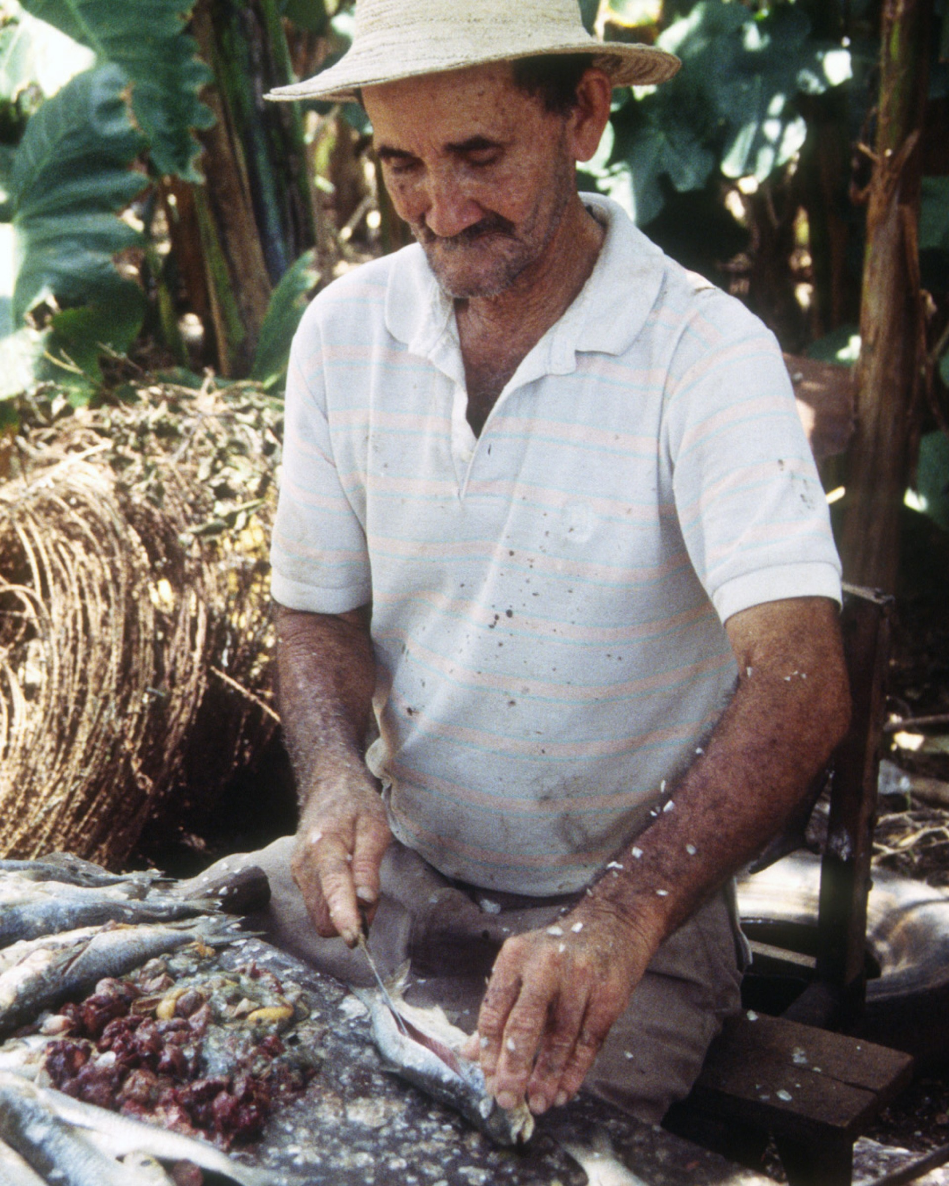 Francisco Villarreal cuts small fish to facilitate salt penetration at his house in Boca de Parita, Herrera, Panama