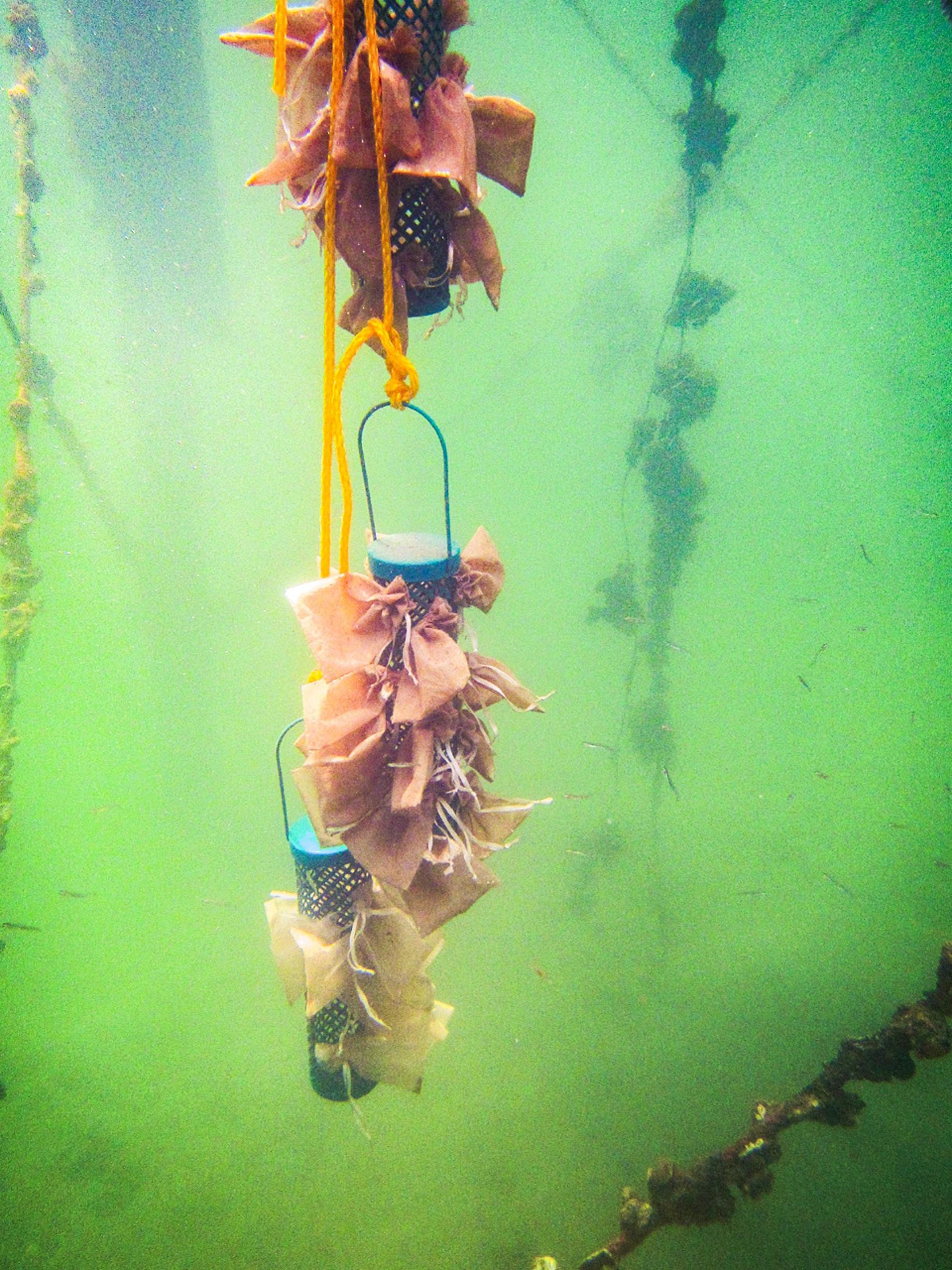 Swimming on microplastics