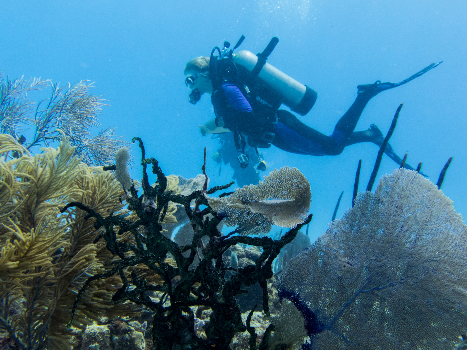 Explore Our Research - Smithsonian Tropical Research Institute