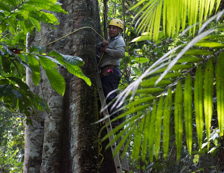 Long-term forest monitoring
