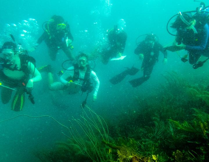 Scientific Diving Program