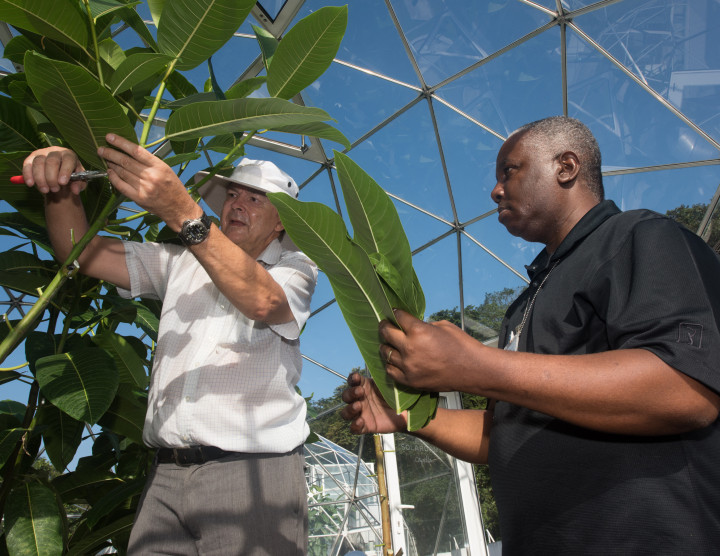 Plant physiology greenhouse