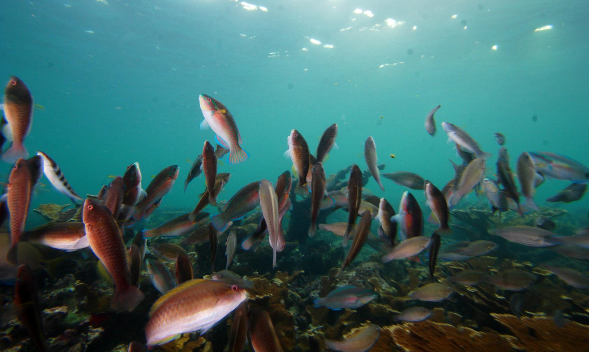 More Fish Mean Healthier Reefs