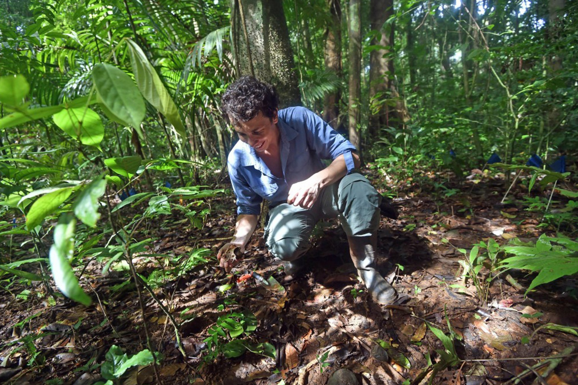 Tropical Forest Seeds Have Three Survival