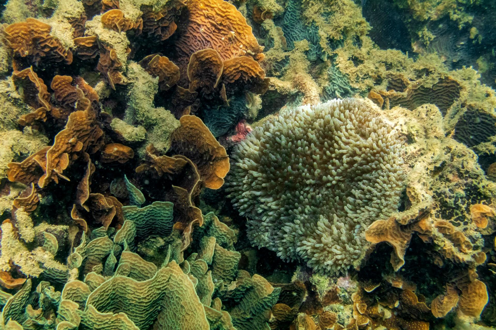 Habitat symbiosis slideshow