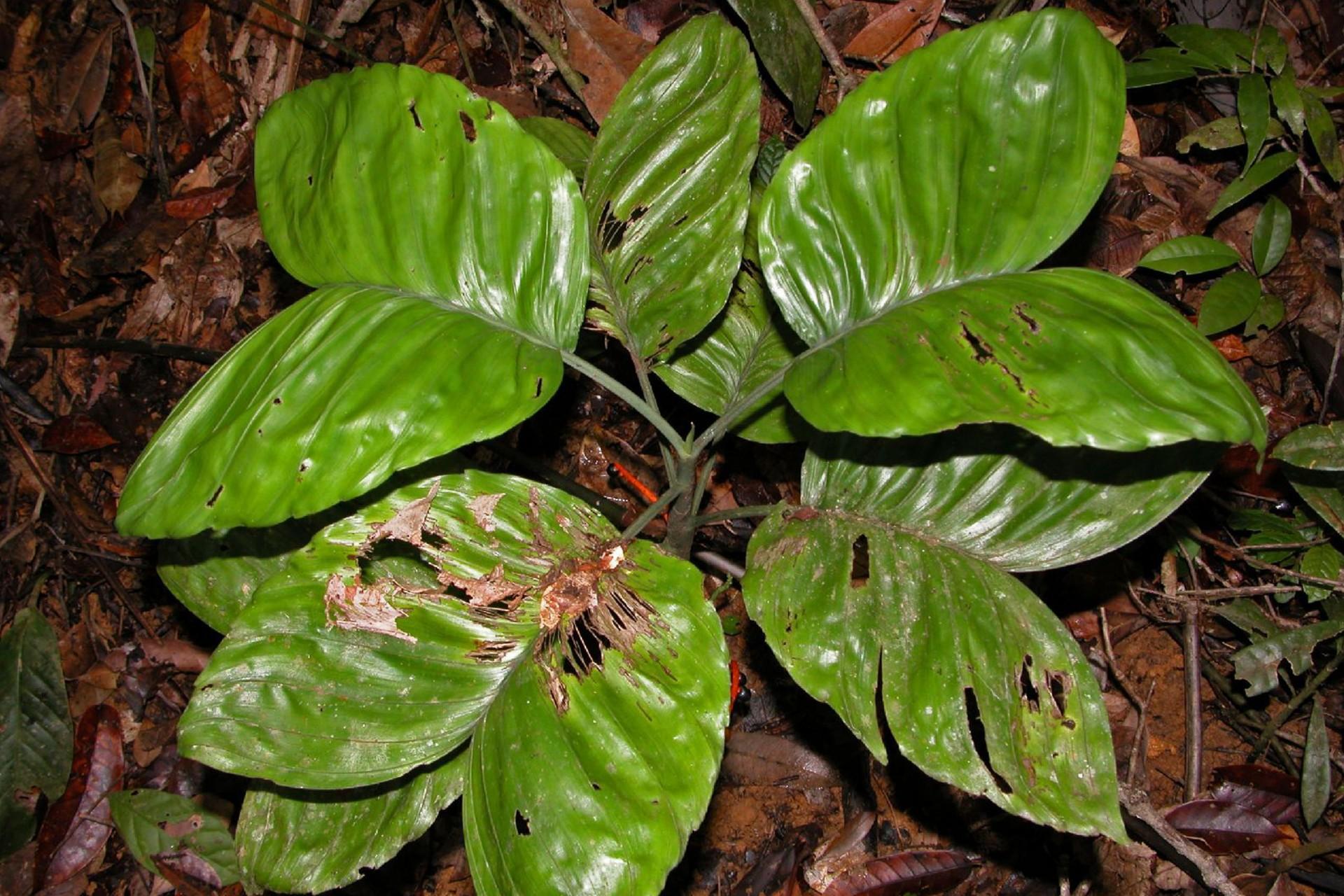 Herbarium of the University of Panama
