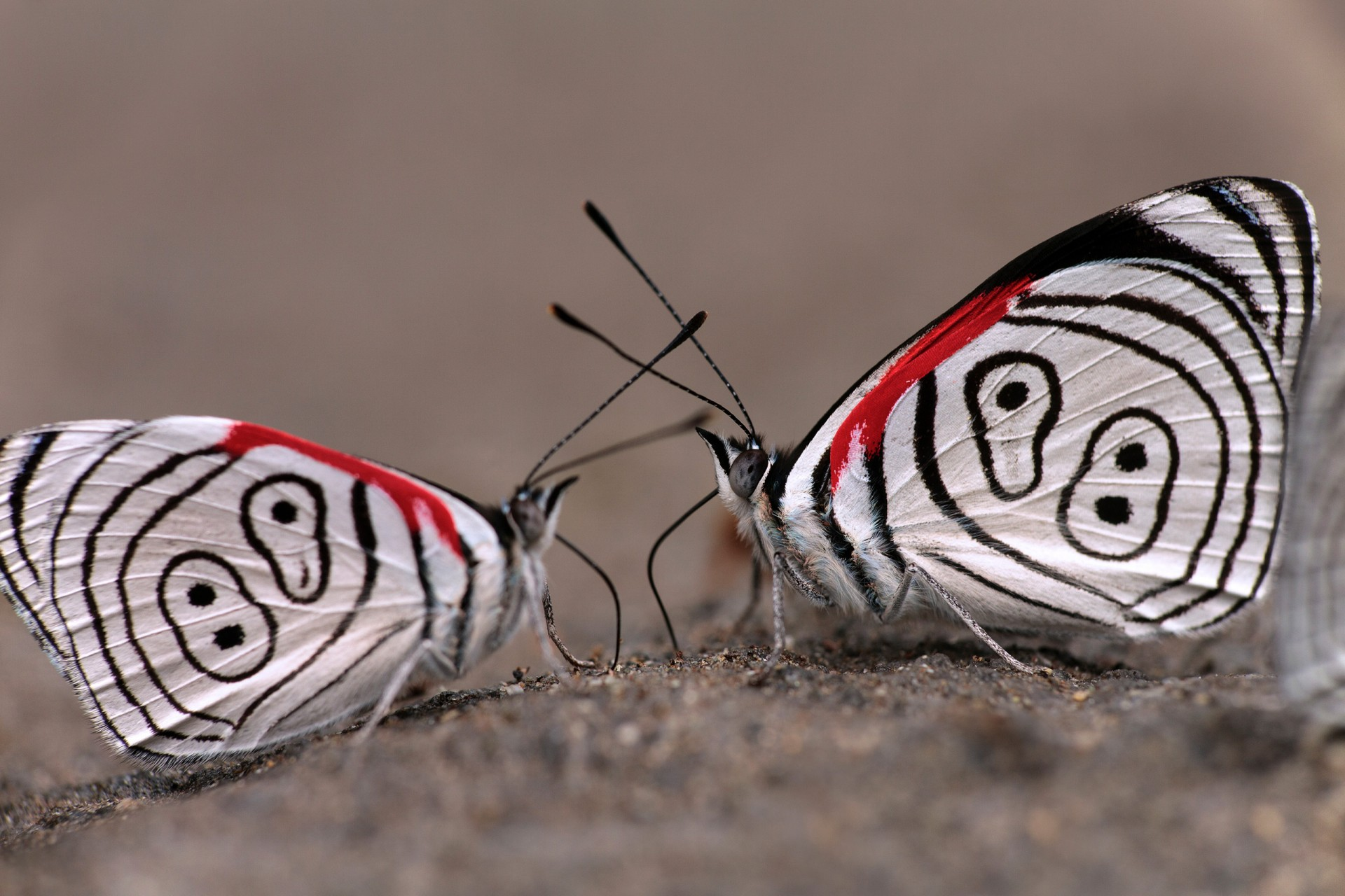 Insects Need Empathy