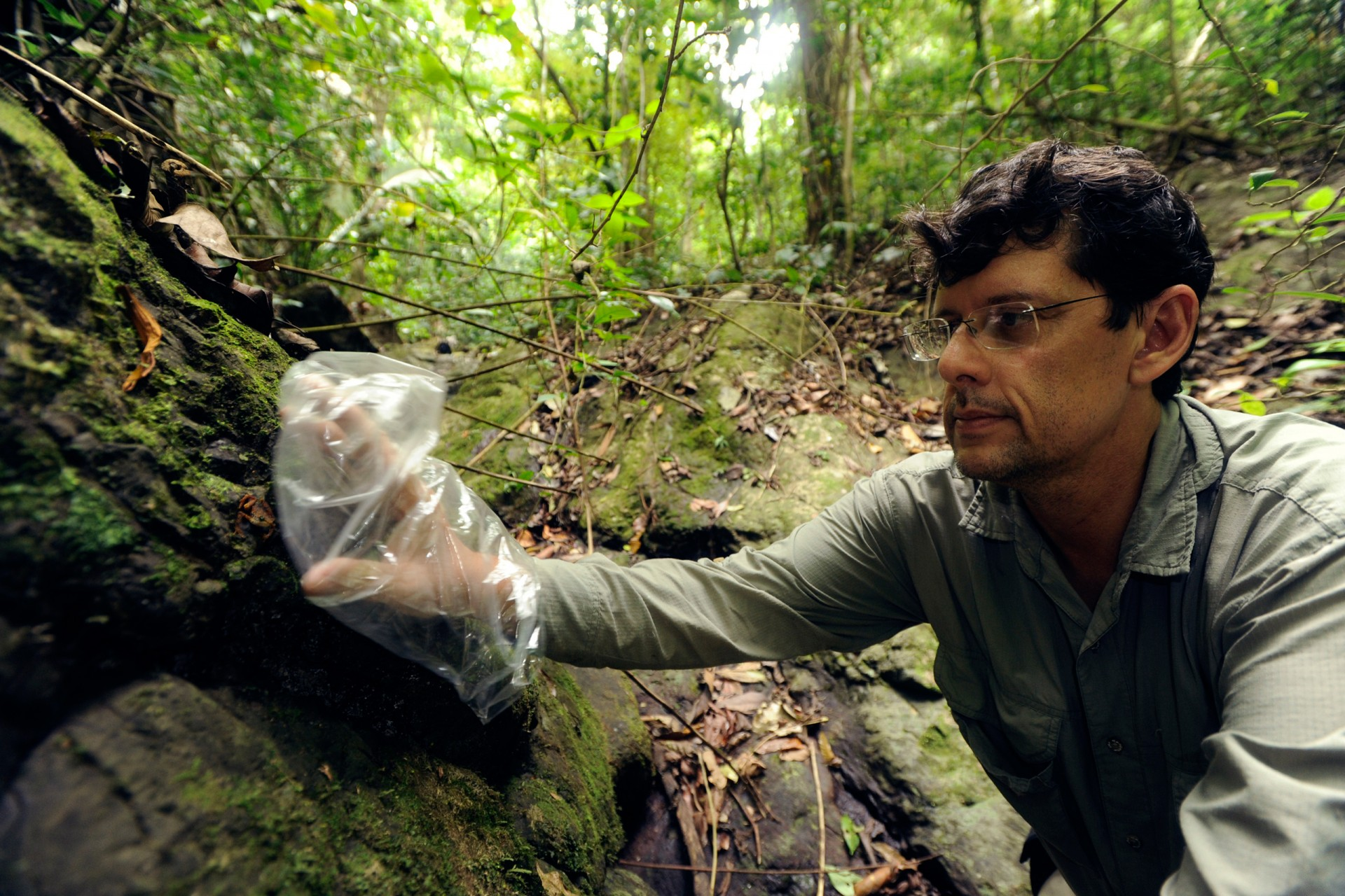 Roberto Ibañez, collecting frogs for captive breeding