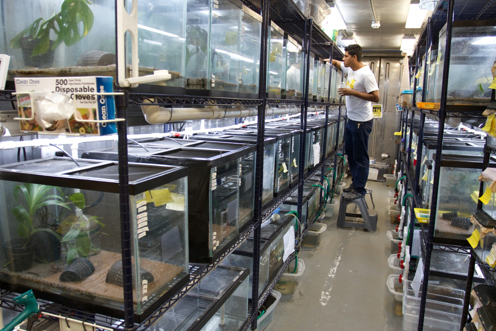 Inside the Panama Amphibian Conservation and Rescue Center in Gamboa