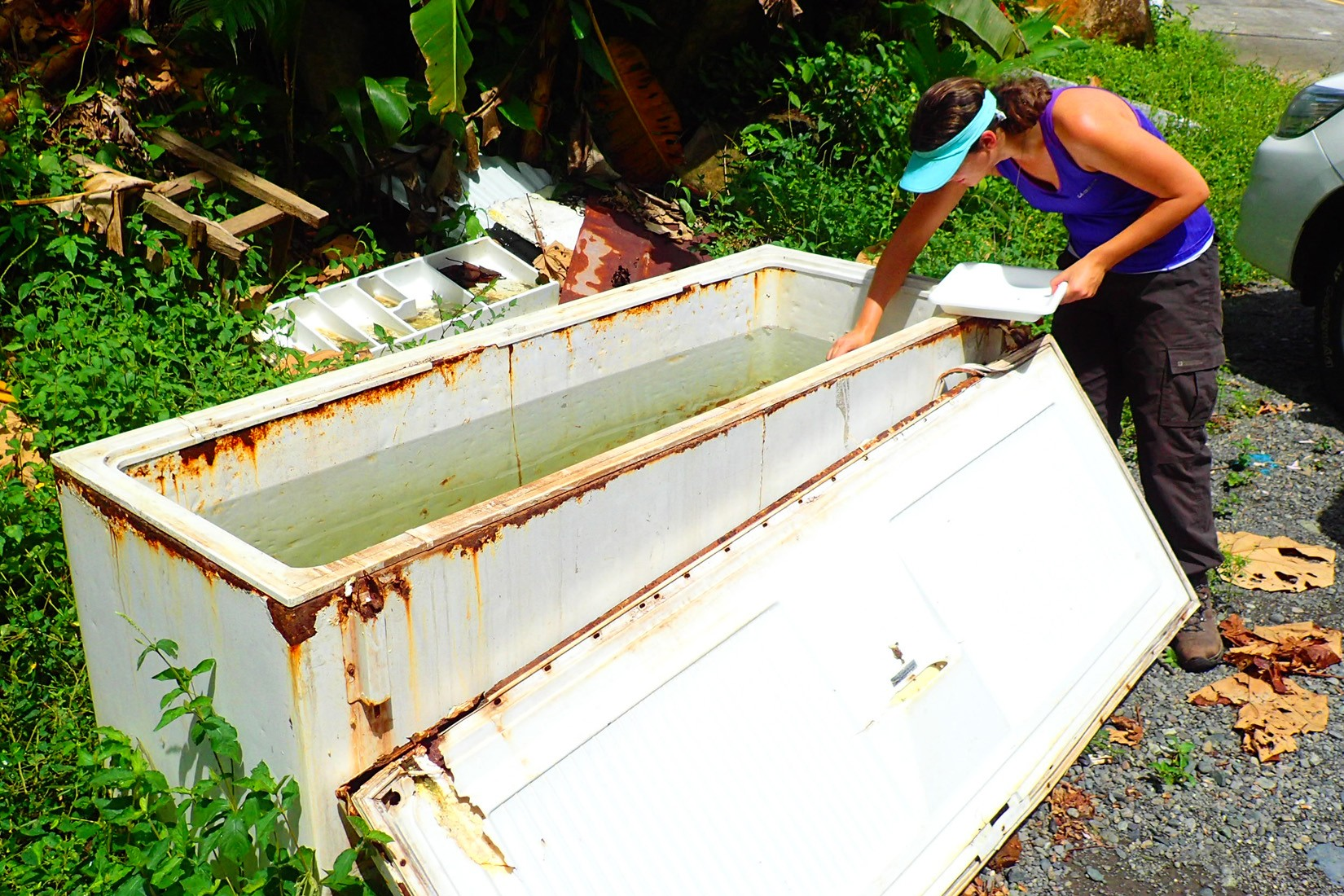 Kelly Bennett, post-doctoral fellow samples mosquito larvae in Panama-wide survey