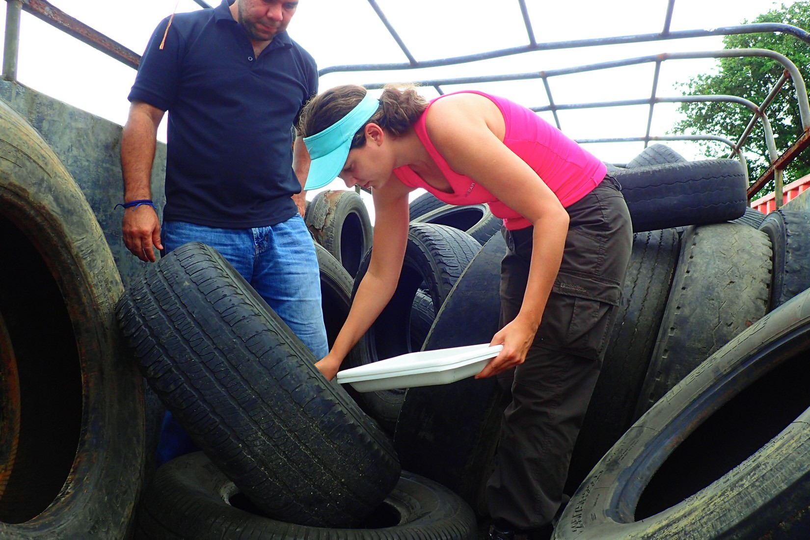 Kelly Bennett, post-doctoral fellow, and Jose Loaiza, principal investigator, sample mosquito larvae from used tires