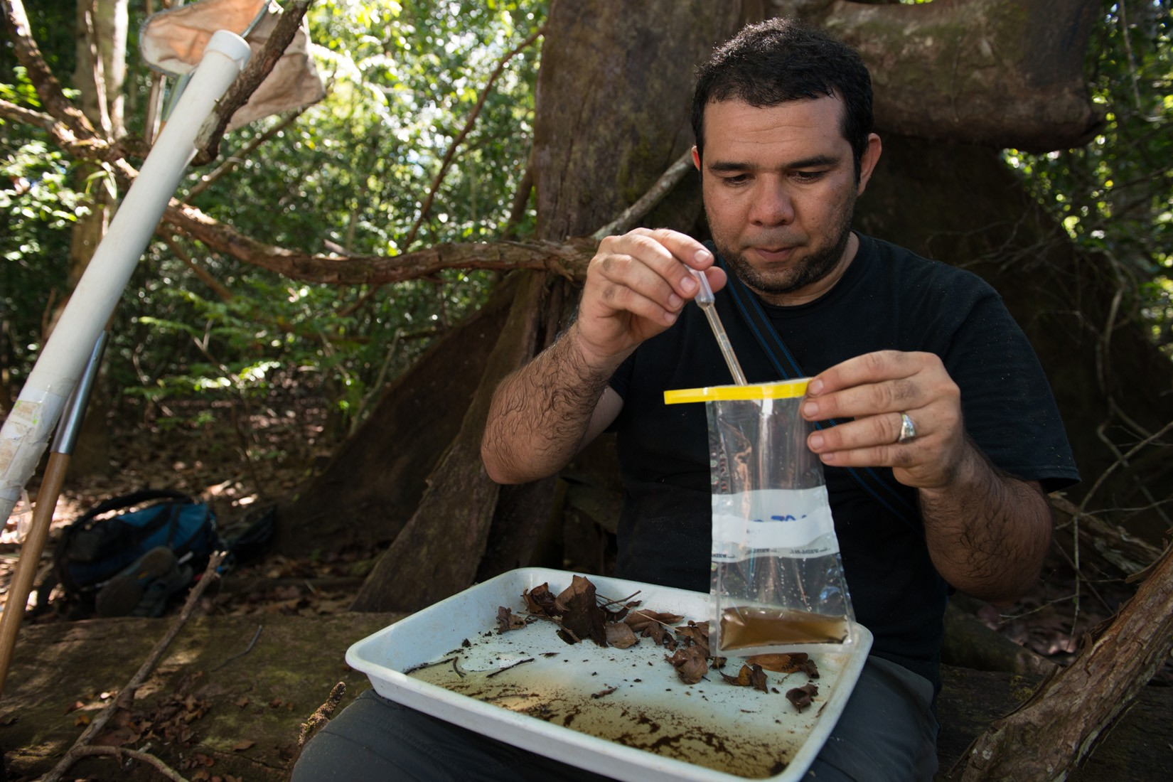 Jose Loaiza, collecting mosquitoes and larvae in Coiba National Park