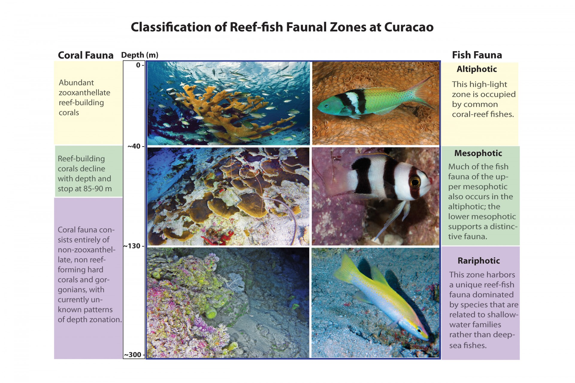 Classification of faunal zones above the aphotic based on analysis of fish assemblages at Curaçao