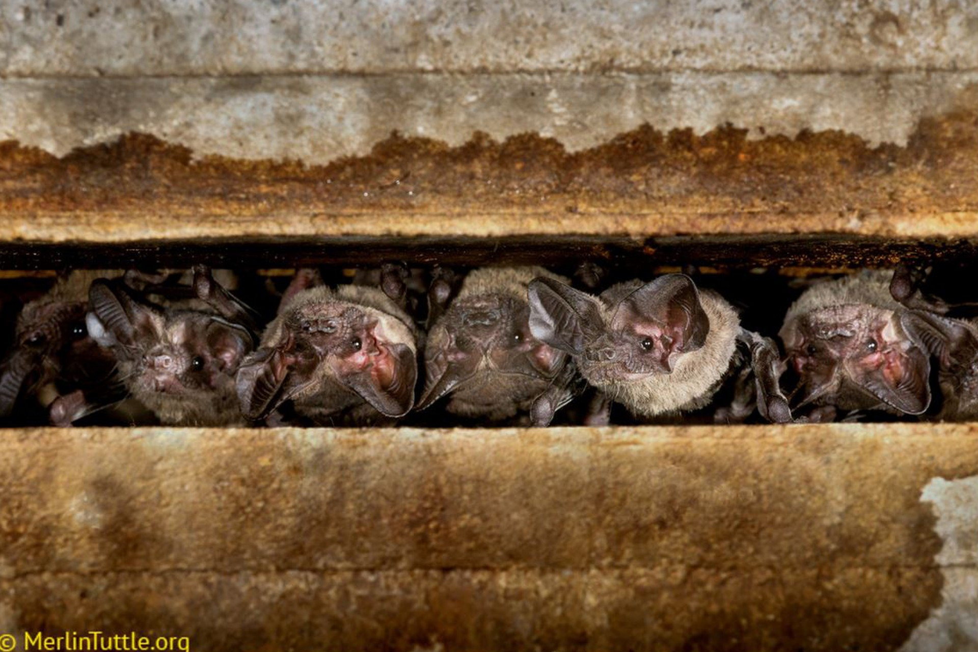 Bats use private and social information as they hunt