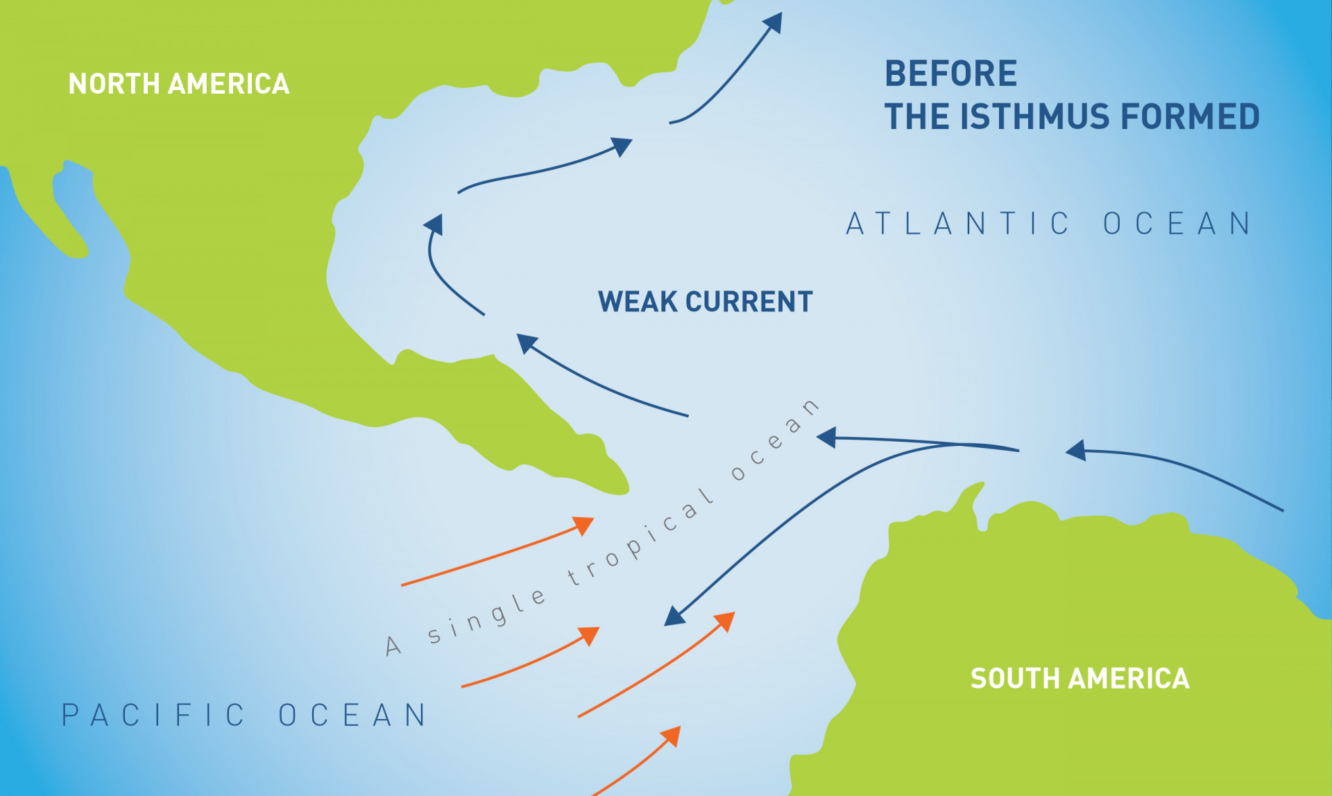 Before the Isthmus of Panama formed there was a single tropical ocean between North and South America that had relatively uniform conditions of temperature and nutrients