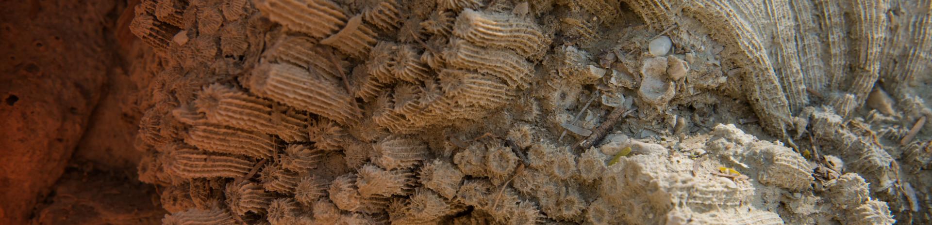 STRI Coral Reef