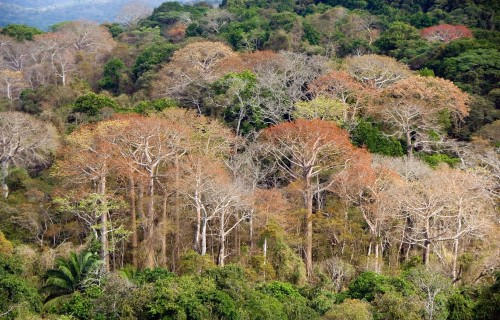 Individual tree species, not forest communities, respond to changes in phosphorus levels