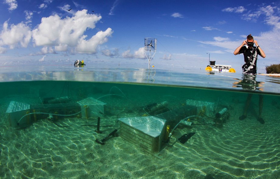 Living coral cover will slow future reef dissolution