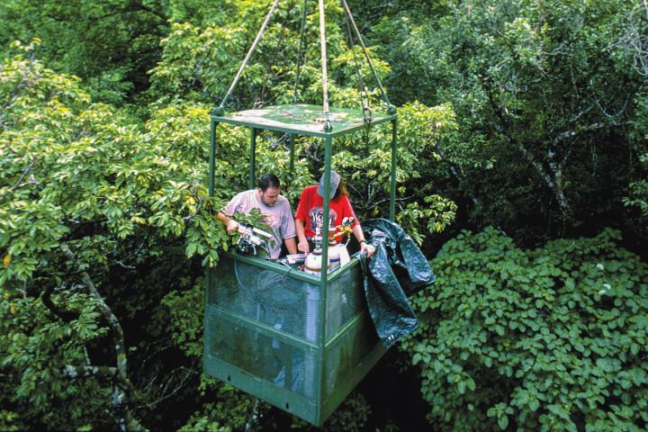 Canopy Access Cranes