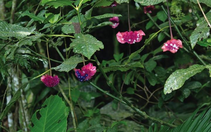 Anniversary of the Herbarium of the University of Panama