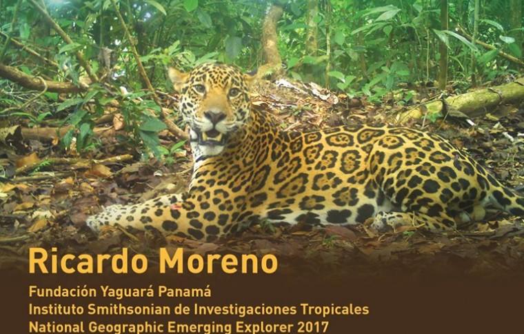 Alternativas para la conservación del jaguar en Panamá; con base en la investigación y educación