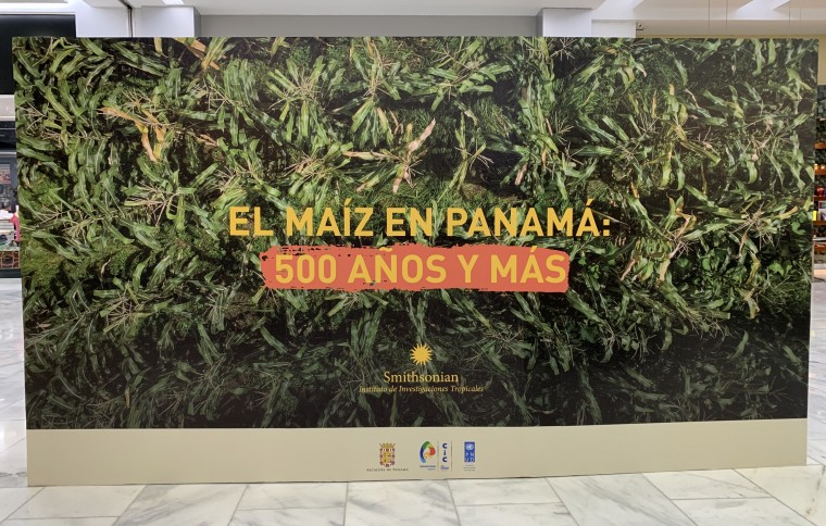 Corn in Panama: 500 Years and More
