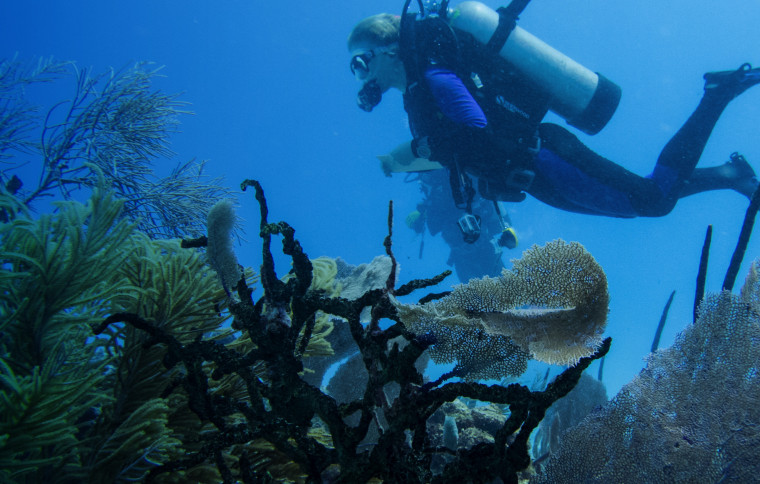 The caribean's declining reefs