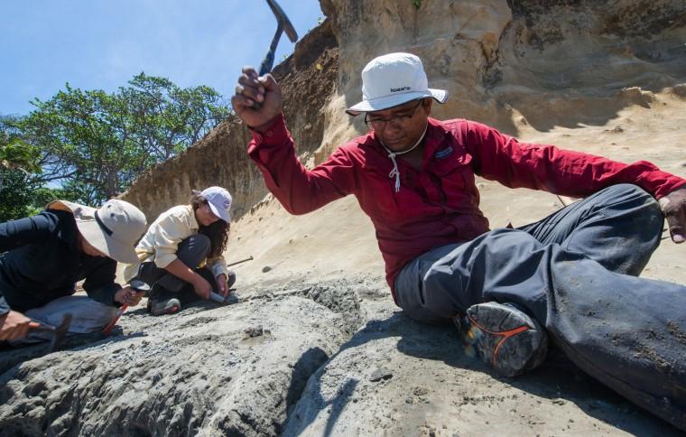 The marine fossil explorer
