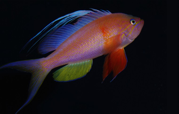 Smithsonian Researchers Name New Ocean Zone